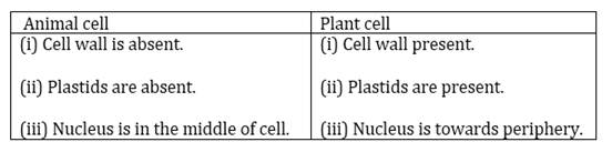 NCERT Solutions for Class 8 Science Cell Structure and Functions