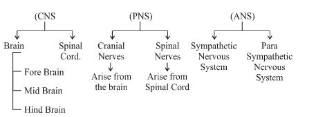 Brain Diagram 10th Class ~ DIAGRAM