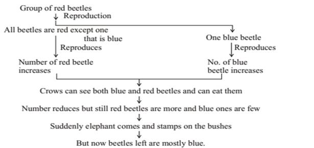Heredity and Evolution class 10 Notes Science | myCBSEguide | CBSE