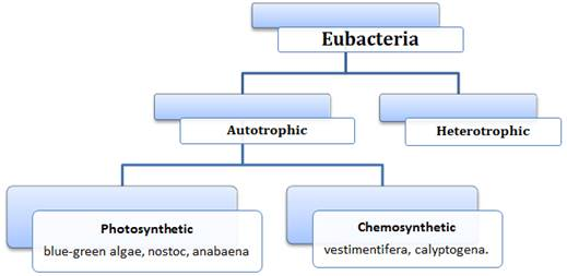 Biological Classification class 11 Notes Biology