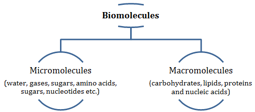 Biomolecules class 11 Notes Biology | myCBSEguide | CBSE