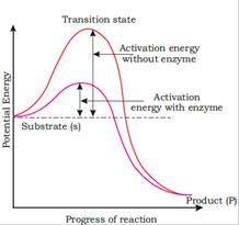 Biomolecules class 11 Notes Biology | myCBSEguide | CBSE