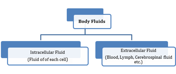 Body Fluids And Circulation class 11 Notes Biology