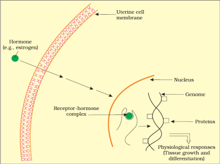 Chemical Coordination and Integration class 11 Notes Biology