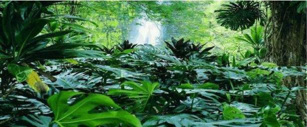 """Résultat de recherche d'images pour """"nature vegetation"""""""