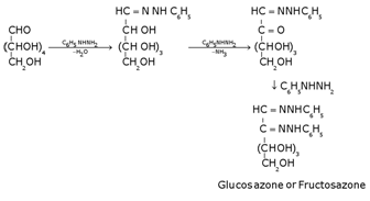 Biomolecules Class 12 Notes Chemistry   myCBSEguide   CBSE Papers