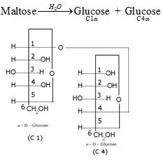 Biomolecules Class 12 Notes Chemistry | myCBSEguide | CBSE
