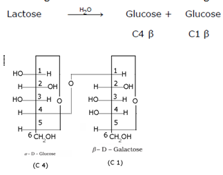 Biomolecules Class 12 Notes Chemistry | myCBSEguide | CBSE Papers